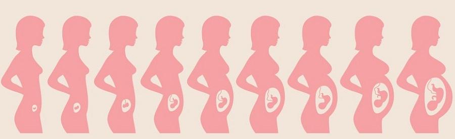 Изменения фигуры у беременной женщины