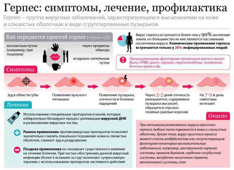 Схема, как передается вирус герпеса у людей
